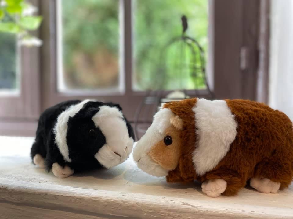 peluche cochons d'inde en vente libre dans notre ferme pédagogique, idée cadeau pour enfants petits et grands en normandie